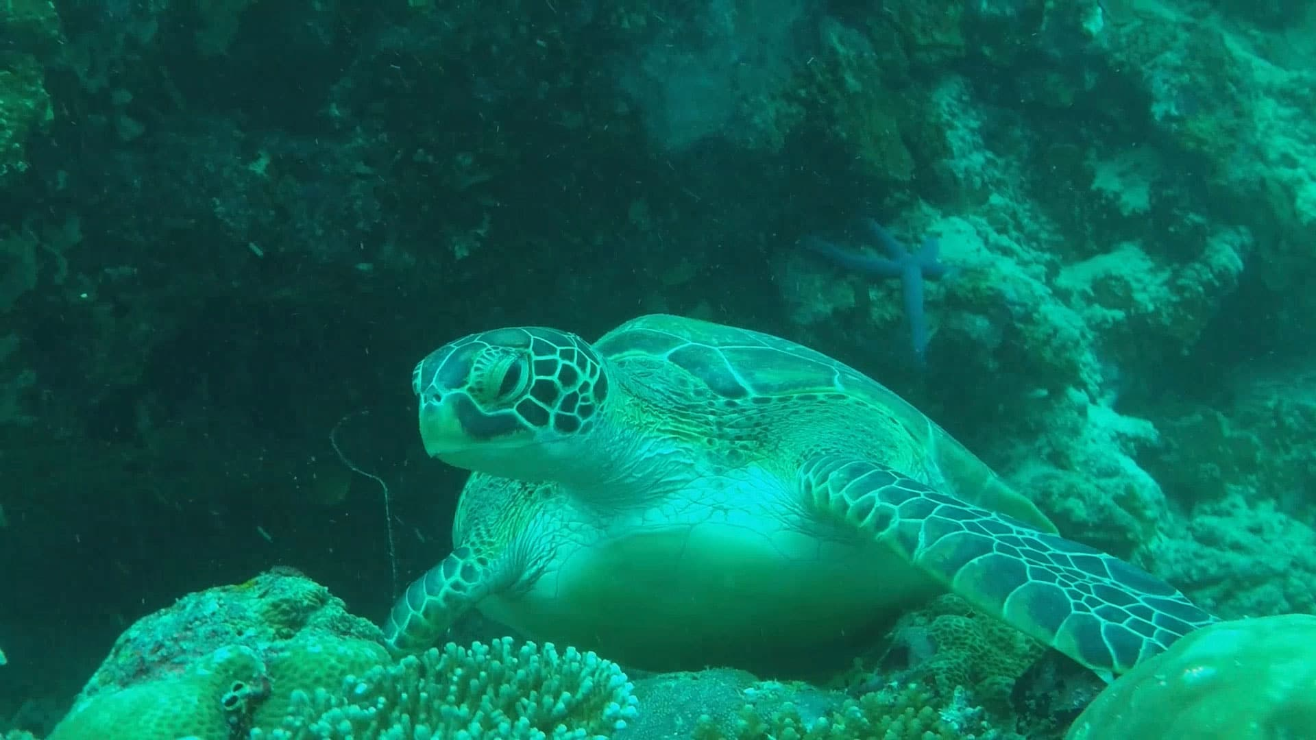 Diving with turtles at Moalboal
