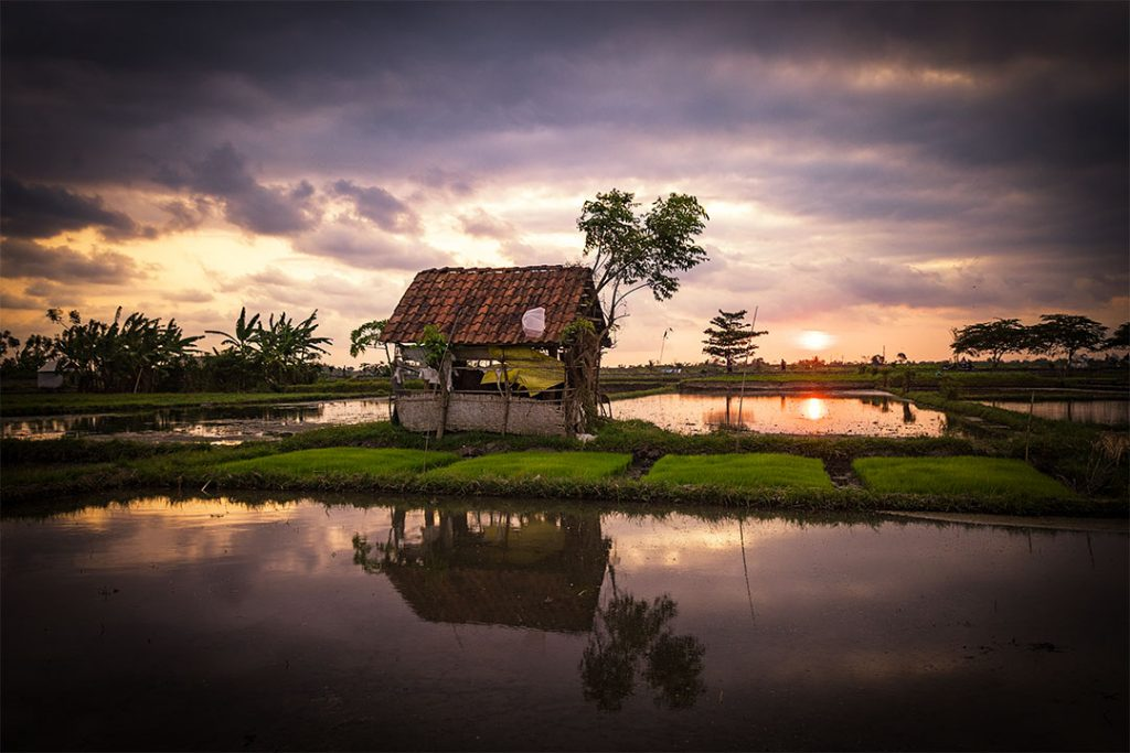 Little shed in between the rice fields